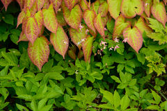 Invasive weeds Stock Photography