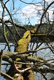 Invaso con l'albero rotto del muschio fotografia stock