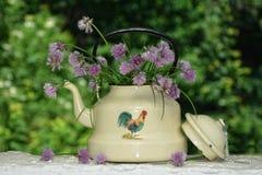 Invecchi il bollitore con la erba cipollina - fiori sulla parete bianca Immagini Stock