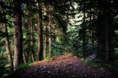 Invecklat trä fotografering för bildbyråer