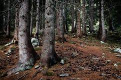 Invecklat trä arkivfoto