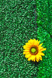Invent sunflower Stock Images
