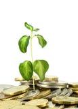 Inventa o crescimento Imagem de Stock Royalty Free