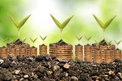 Invente na moeda dourada do solo sobre o fundo do verde do bokeh Foto de Stock Royalty Free