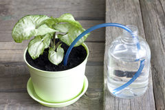 Invention of watering plants creative concept Stock Image