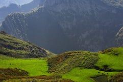 Inverdica i pascoli con il bestiame nelle montagne Fotografie Stock Libere da Diritti