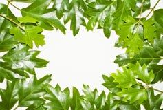 Inverdica il blocco per grafici dei fogli dell'edera Immagine Stock