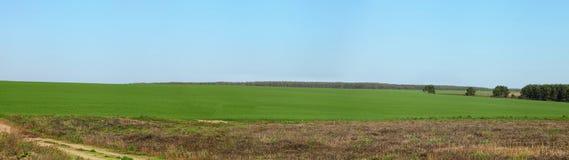 Inverdica il campo ed il cielo blu fotografie stock libere da diritti