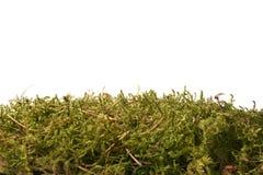 inverdica il muschio della foresta immagine stock libera da diritti