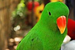 Inverdica il pappagallo Immagini Stock