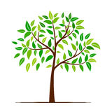 Inverdica l'albero con i fogli Fotografie Stock Libere da Diritti