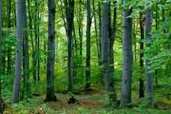 Inverdica la foresta Fotografia Stock