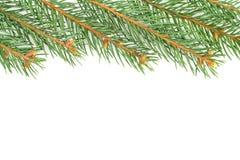 Inverdica le filiali di albero dell'abete Fotografie Stock