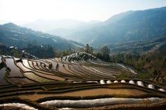 Inverdisca il paesaggio piantato del letto di semina del giacimento del riso di montagna in Cina Fotografia Stock Libera da Diritti
