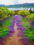 Inverewe trädgårdar Skottland Arkivfoto