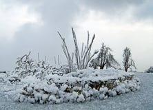Invernadero imagen de archivo
