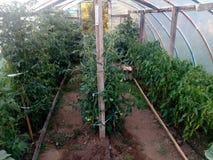 invernadero Foto de archivo