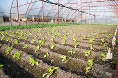 Invernadero agrícola fotografía de archivo