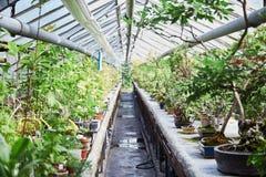 invernadero Cactus verdes de los succulents Primer Fondo imagen de archivo libre de regalías