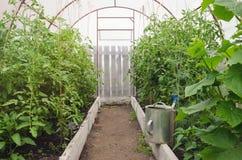 Invernadero casero con las plantas Imagen de archivo