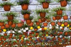 Invernadero con las flores Foto de archivo libre de regalías