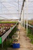 Invernadero con las flores Fotografía de archivo
