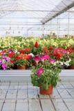 Invernadero con las flores Foto de archivo