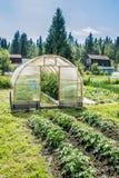 Invernadero con las plantas Fotos de archivo libres de regalías