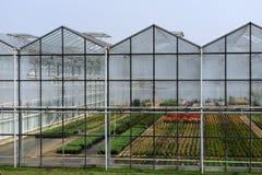 Invernadero con las plantas Imagen de archivo libre de regalías