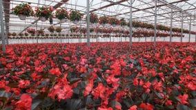 Invernadero de cristal grande con las flores Flores crecientes en invernaderos Interior de un invernadero moderno de la flor Flor almacen de video
