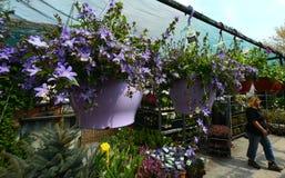 Invernadero de flores Fotos de archivo