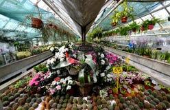 Invernadero de flores Foto de archivo libre de regalías