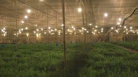 Invernadero de la agricultura para las hierbas y las especias crecientes metrajes