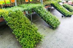 Invernadero de la tienda del jardín Foto de archivo libre de regalías