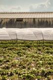 Invernadero de los túneles plásticos del polietileno en un Fie agrícola Fotos de archivo libres de regalías