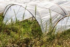 Invernadero de los túneles plásticos del polietileno en un Fie agrícola Imágenes de archivo libres de regalías