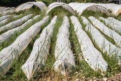 Invernadero de los túneles plásticos del polietileno en un Fie agrícola Fotografía de archivo
