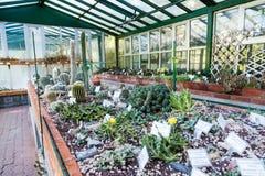 Invernadero del cactus imágenes de archivo libres de regalías