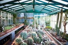 Invernadero del cactus fotografía de archivo