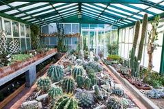 Invernadero del cactus imagen de archivo