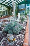 Invernadero del cactus imagenes de archivo