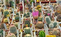 Invernadero del cactus Foto de archivo