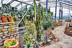 Invernadero del cactus Fotografía de archivo libre de regalías