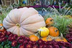 Invernadero del hotel de Bellagio y jardines botánicos Fotos de archivo libres de regalías