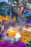 Invernadero del hotel de Bellagio y jardines botánicos Imagen de archivo libre de regalías