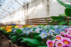 Invernadero del jardín agribusiness fotografía de archivo libre de regalías