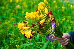 Invernadero del jardín agribusiness foto de archivo