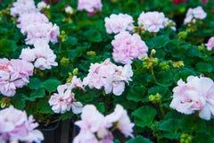 Invernadero del jardín agribusiness imagen de archivo libre de regalías