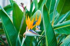 Invernadero del jardín agribusiness fotos de archivo libres de regalías