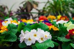 Invernadero del jardín agribusiness imagenes de archivo